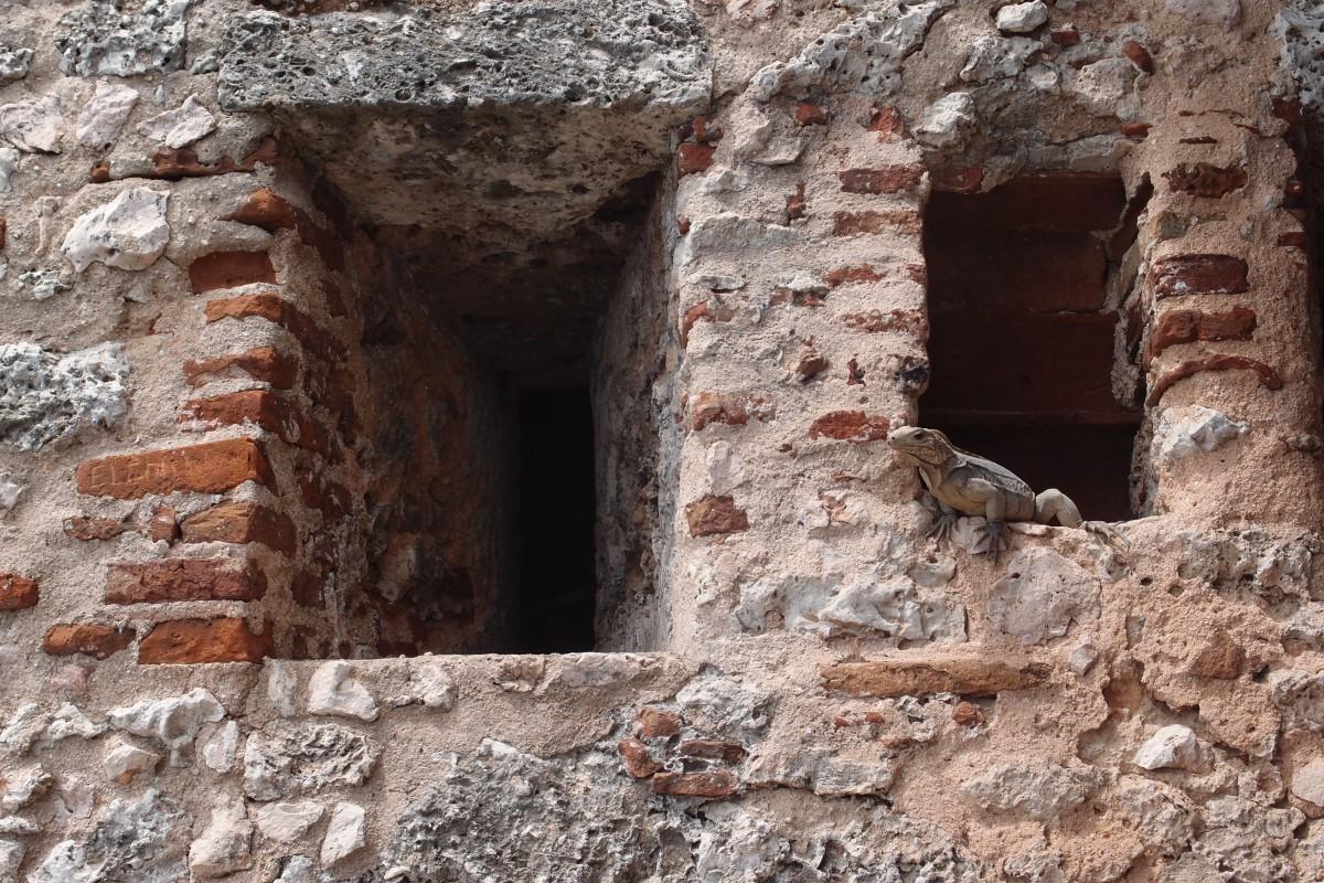 Lizard keeping look over Castillo de San Pedro de la Roca del Morro