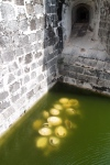 Never got to ask why these turtle shells were abandoned in the Castillo de la Real Fuerza moat